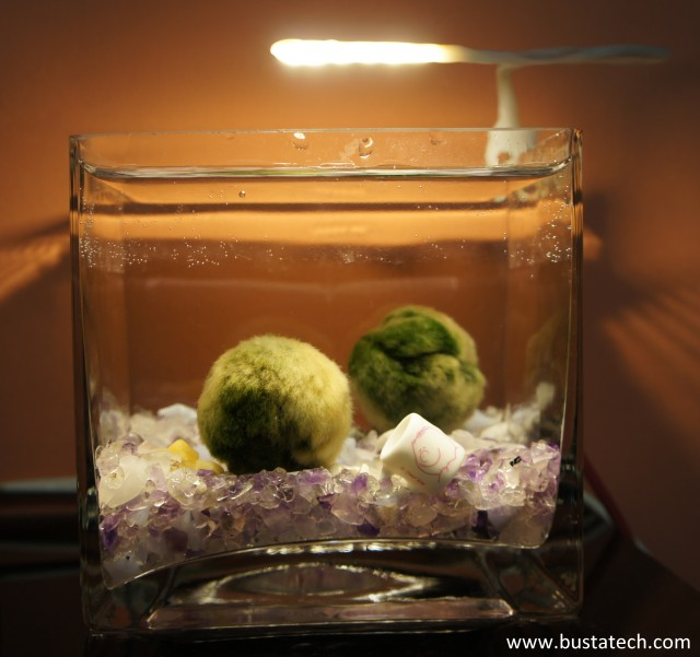 DIY LED lamp on Marimo tank